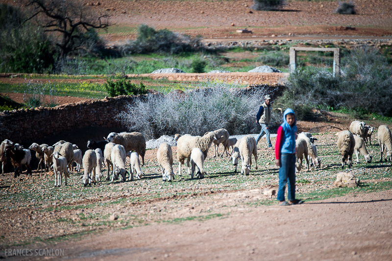 201802_Morocco_Fes_photo-frances-scanlon-03419_sheep herder