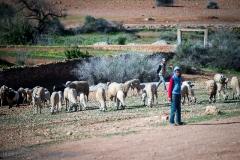 201802_Morocco_Fes_photo-frances-scanlon-03419_sheep herder