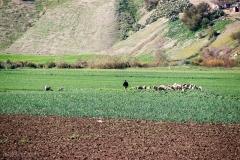 201802_Morocco_Fes_photo-frances-scanlon-03924_sheep herder