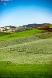 201802_Morocco_Fes_photo-frances-scanlon-04634