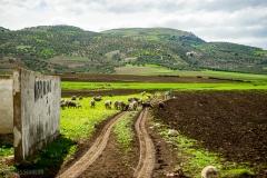 201802_Morocco_Fes_photo-frances-scanlon-04678