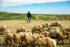 201802_Morocco_Fes_photo-frances-scanlon-04745_sheepherder