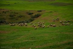 201802_Morocco_Fes_photo-frances-scanlon-04769