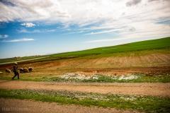 201802_Morocco_Fes_photo-frances-scanlon-04775_sheep