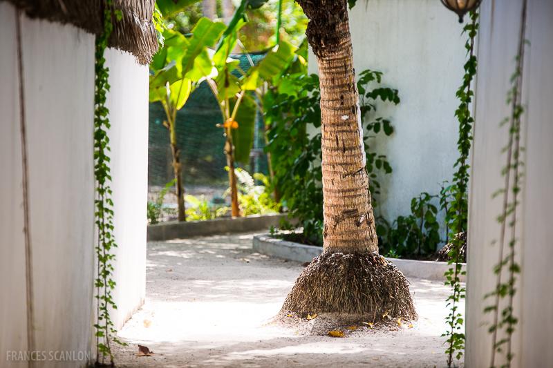201803_Maldives_photo-frances-scanlon-02399