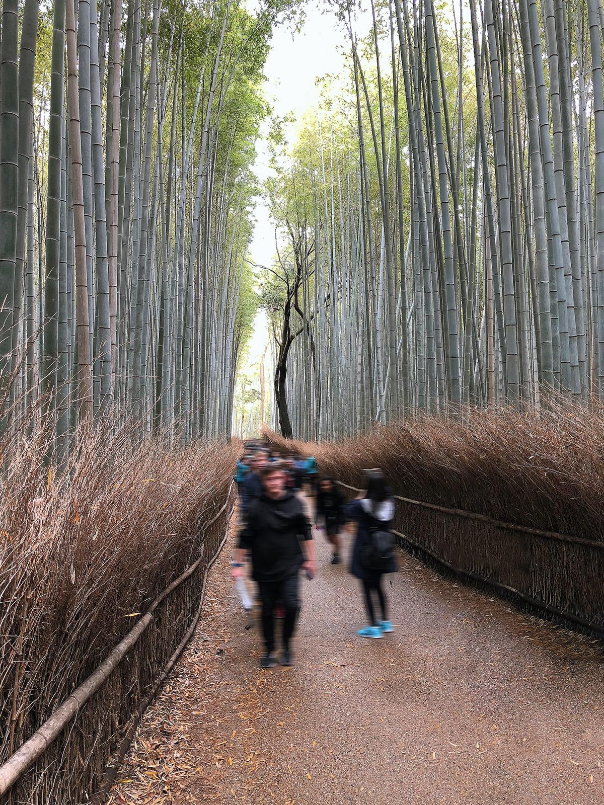 IMG_0785_bamboo trail_MR
