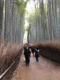 IMG_0785_bamboo trail_MR